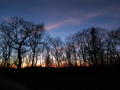 Siler Bald Sunset through the trees