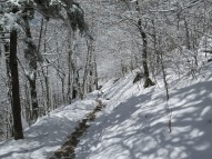 Snow covered trail