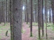 Unaka Mountain spruce forest