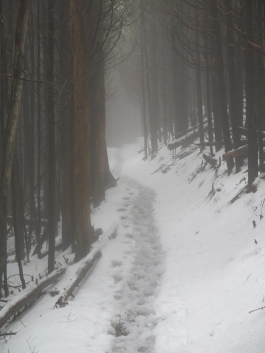 Fog and snow on the trail