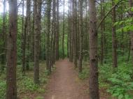 Virginia Trail