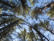 Tree canopy over the trail