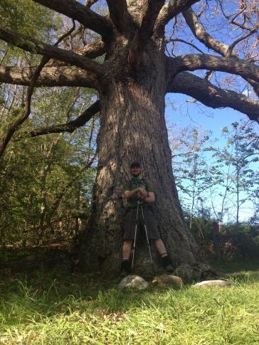 PoBoy under Keffer Oak