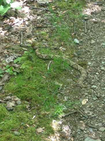 Snake on trail