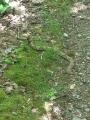 Snake on trail