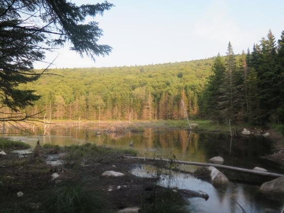 Vermont beaver dam
