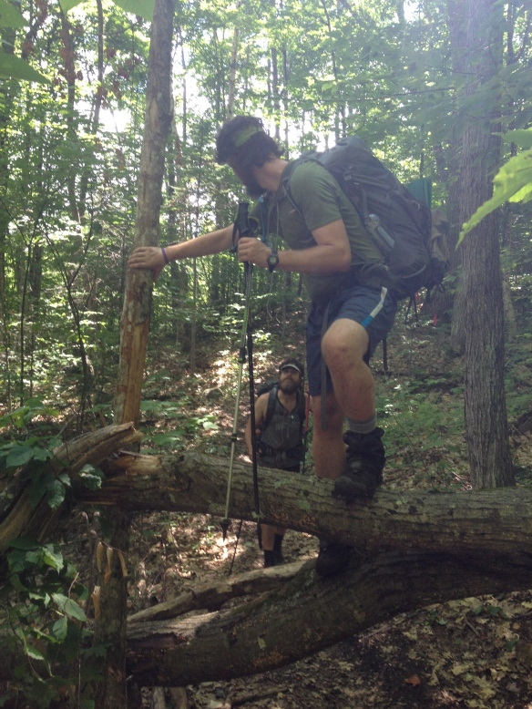 PoBoy negotiating a fallen tree up Mt. Moosilauke